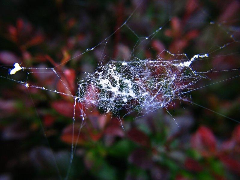 jun 10 3214 web debris