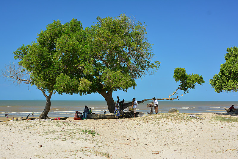 jun 13 3866 under shade tree