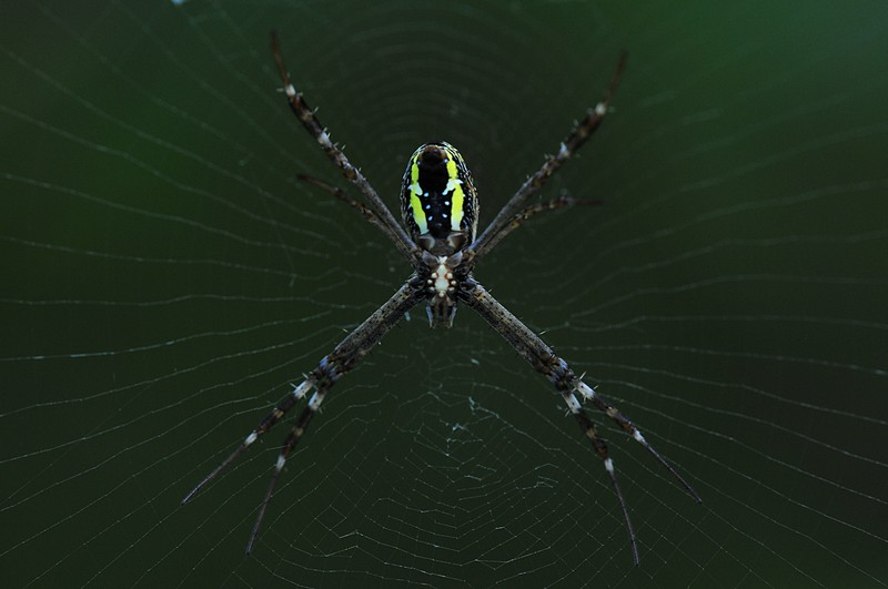 jun 13 8162 argiope