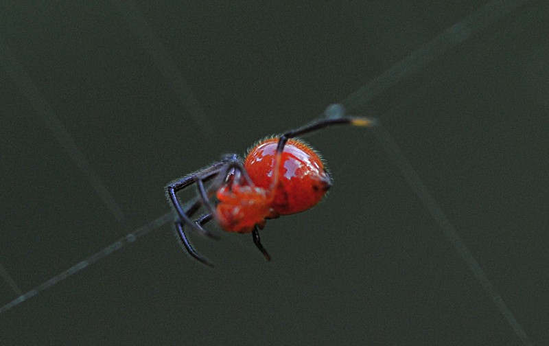 jun 13 8189 argyrodes reflections