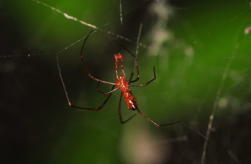 jun 13 8220 argyrodes