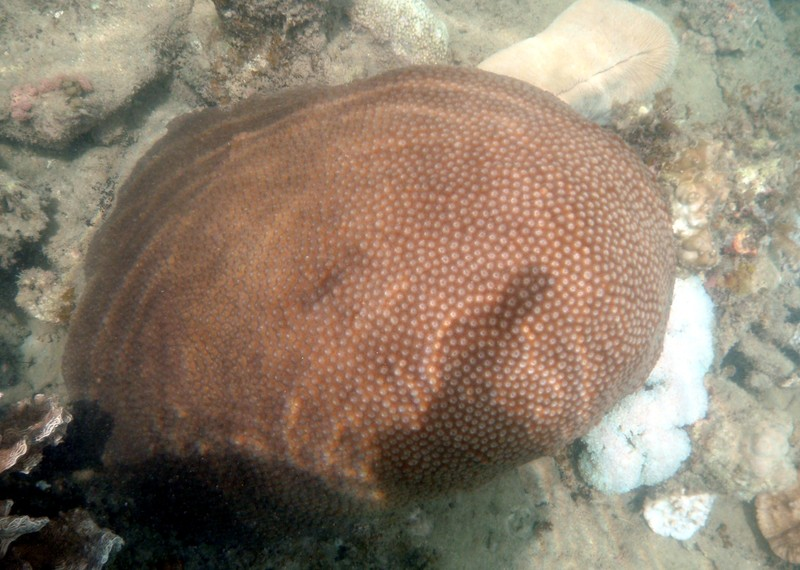 jun 19 2160 honeycomb coral