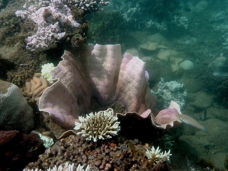 jun 19 2162 purple coral
