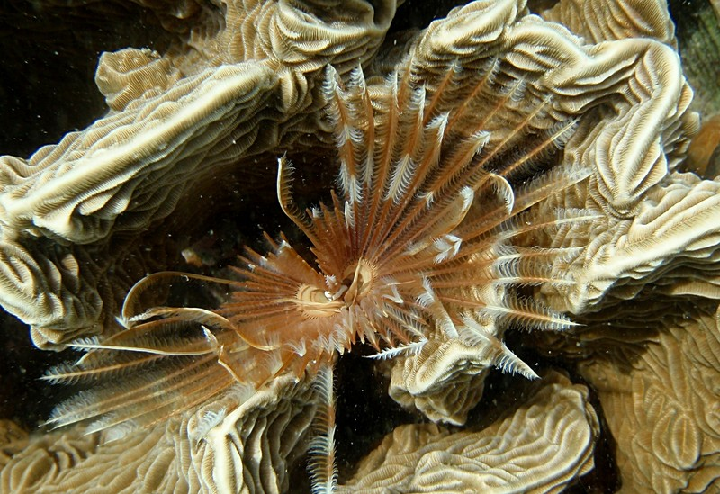 jun 19 2171 featherworm