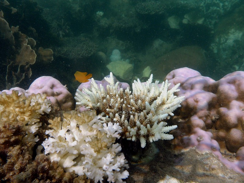 jun 19 2187 yellow fish
