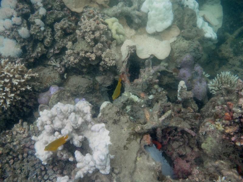 jun 19 2215 yellow fish clown