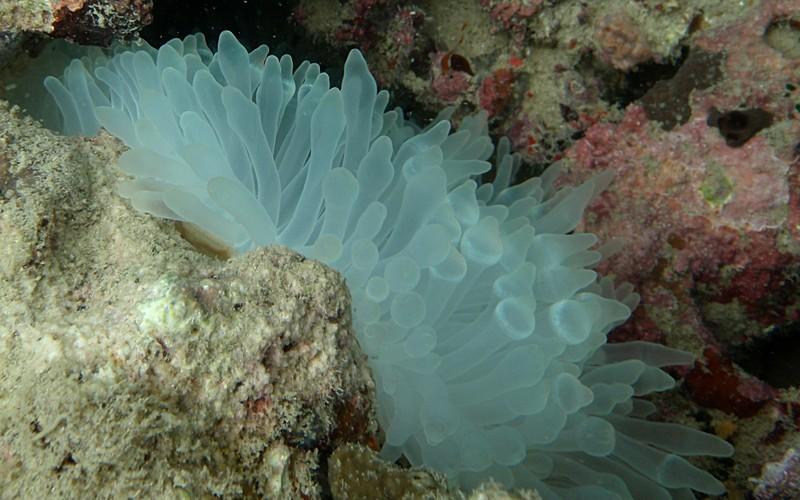 jun 19 2220 white anemone