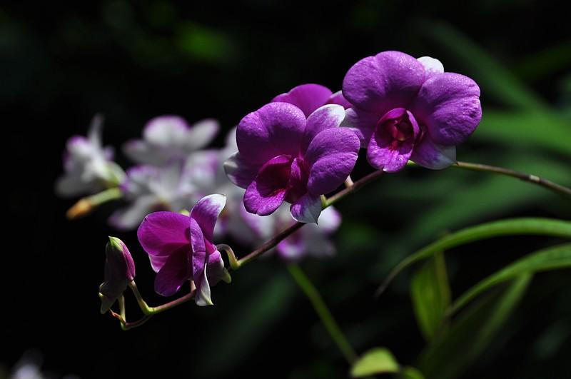 the color purple shug: star