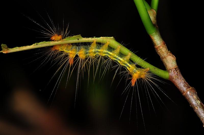 jun 25 8379 caterpillar
