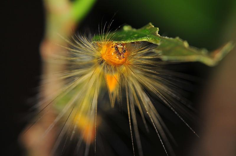 jun 25 8380 caterpillar face