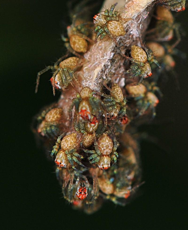 jun 25 8392 baby spiders
