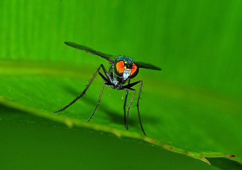 jun 26 8491 metallic fly