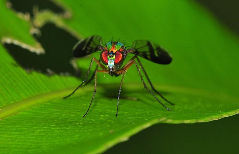 jun 26 8493 metallic fly face