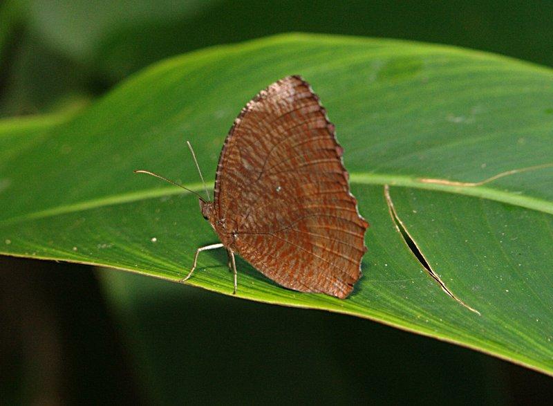 jun 28 5718 butterfly