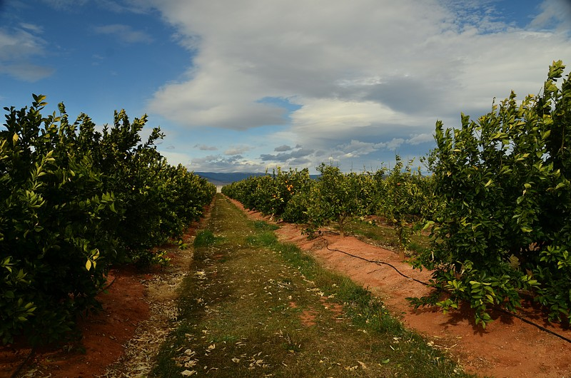 mar 04 6931 orange grove