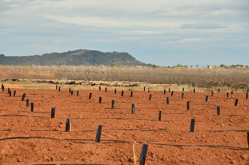 mar 04 6938 new trees
