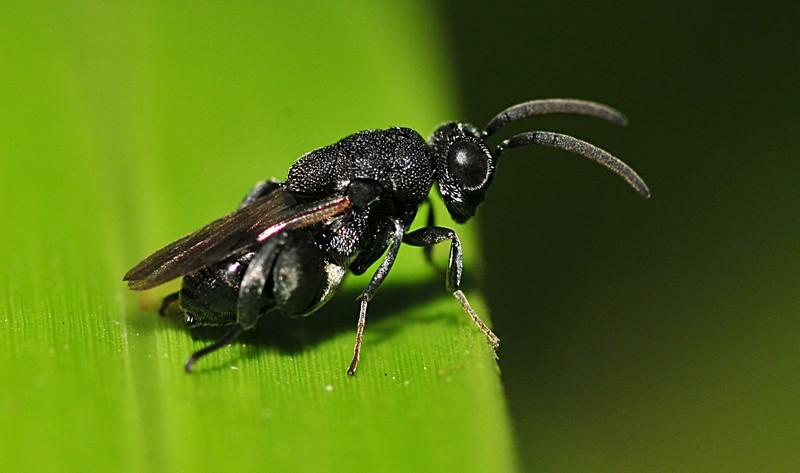 mar 06 7369 black bug