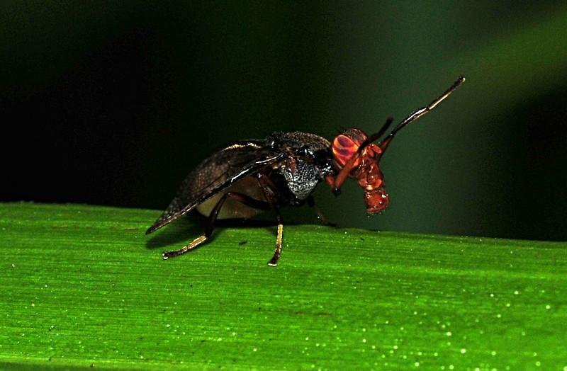 mar 06 7372 black bug