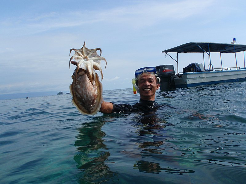 mar 07 3244 squid john