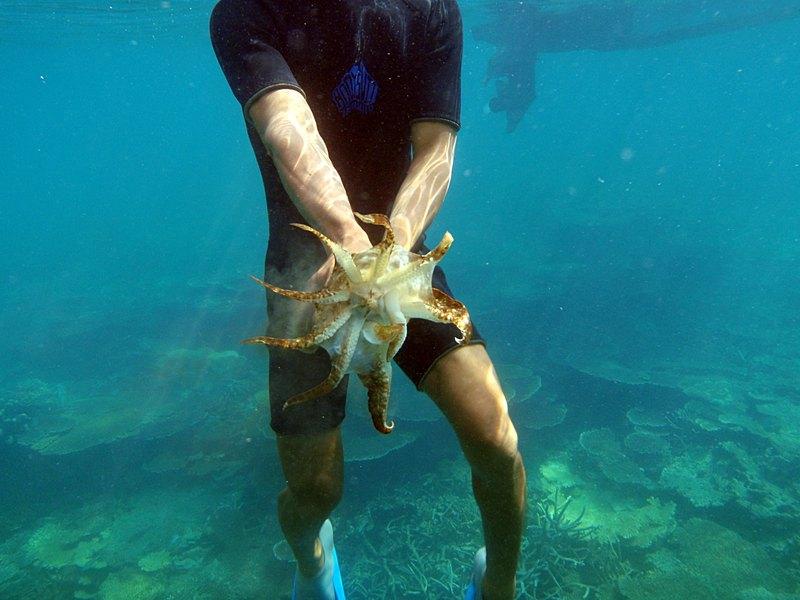 mar 07 3247 squid front