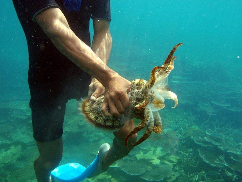 mar 07 3248 squid
