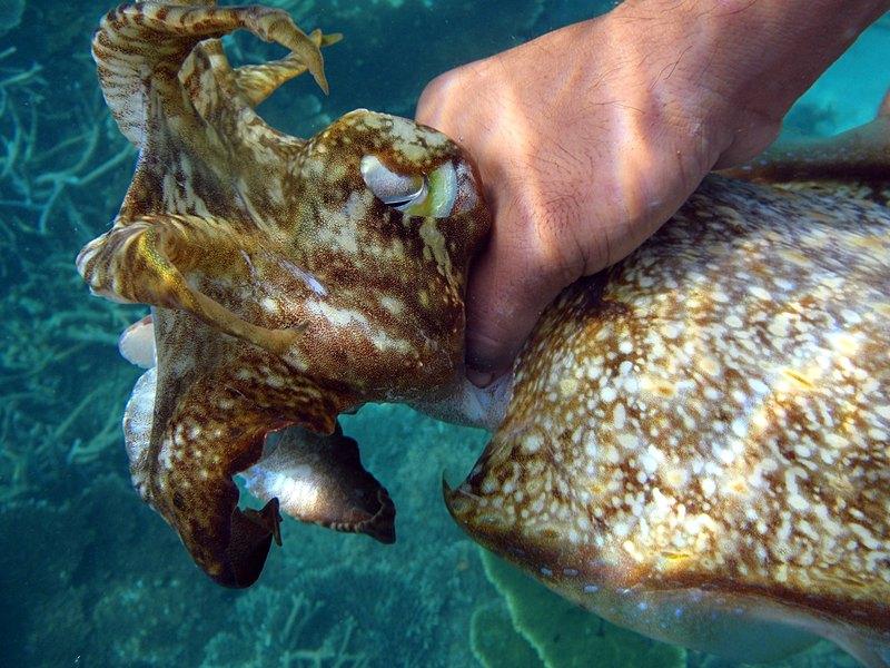 mar 07 3256 squid