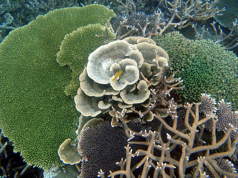 mar 07 3315 yellow fish coral