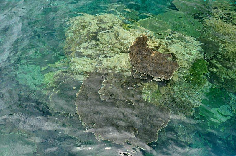 mar 07 4413 coral