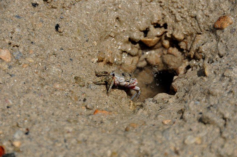 mar 07 4464 crab