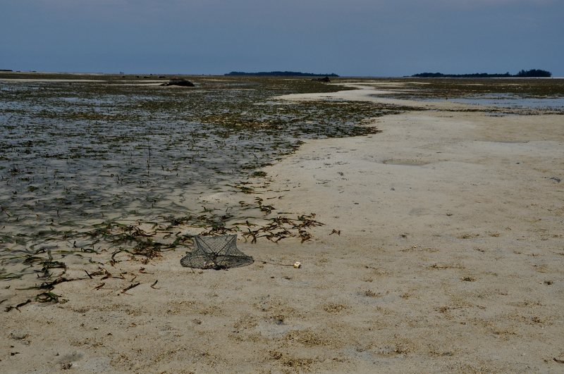 mar 07 4474 low tide crab