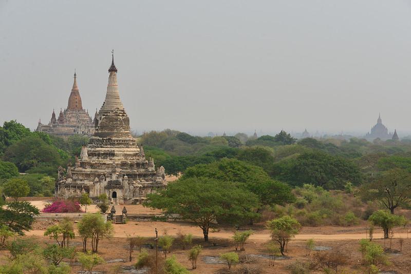 mar 10 1727 pagoda trees