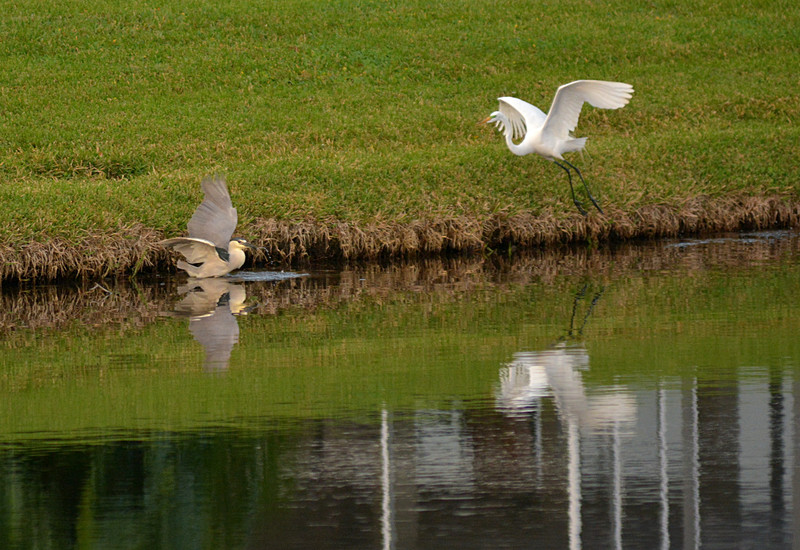 mar 10 9980 egret dislikes competition