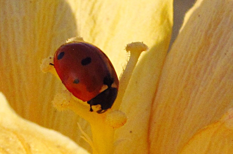 mar 11 3180 ladybug close
