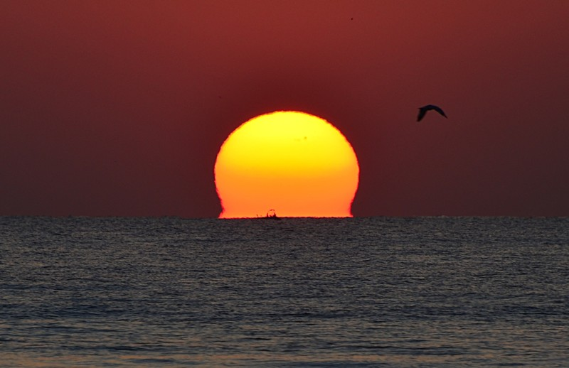 mar 11 8296 sunbird fisherman close