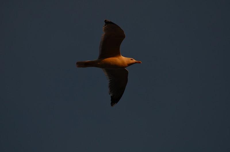 mar 17 9008 sunset flying