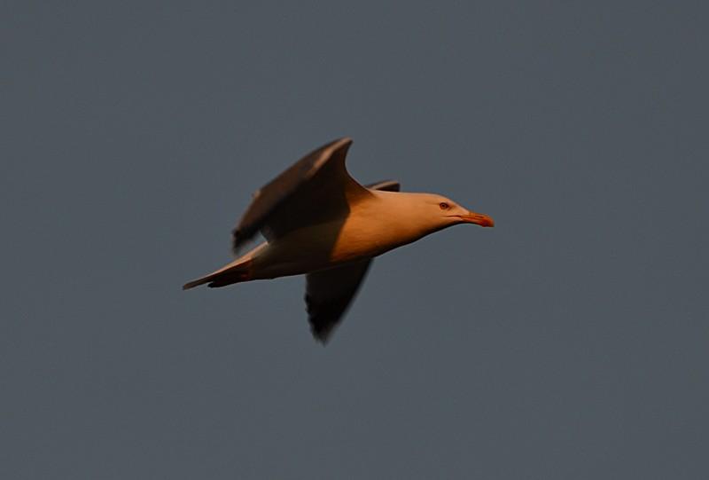 mar 17 9018 flying