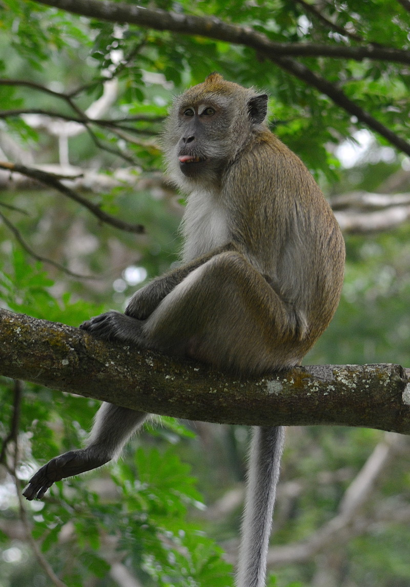 small essay on monkey The monkey's paw and tell tale heart cameron smith the most frightening  thing in  at the ending of tell tale heart in paragraph 9 yet the sound  increased and  the monkeys paw is a supernatural short story by the author  ww jacobs,.