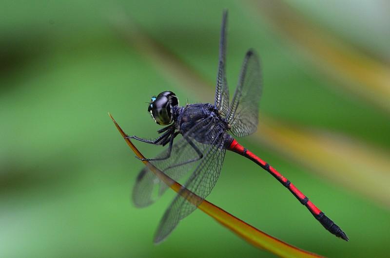 mar 25 9252 dragonfly