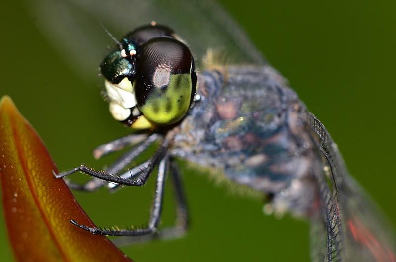 mar 25 9268 dragonfly eye