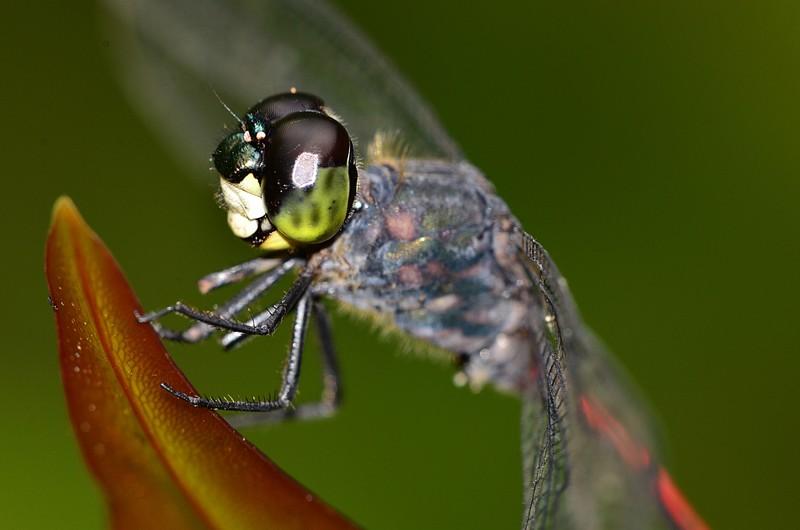 mar 25 9270 dragonfly