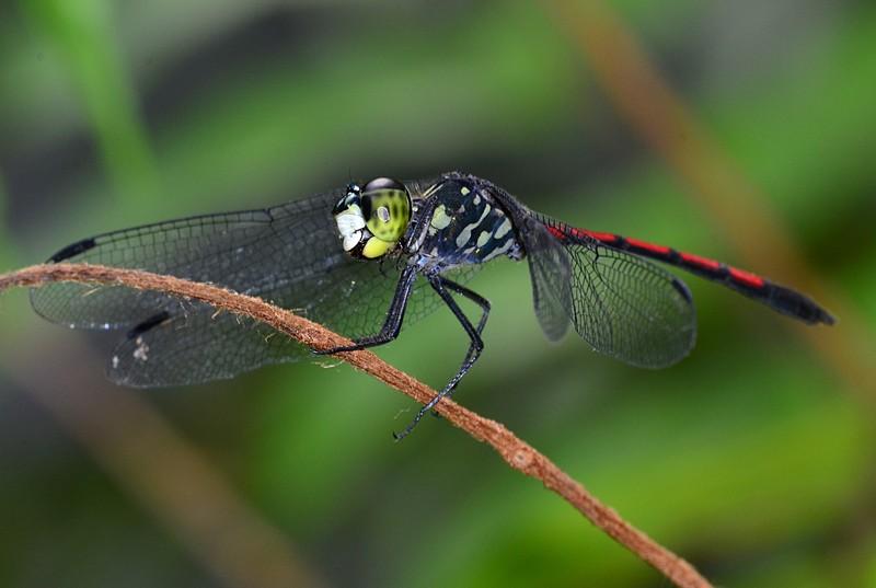 mar 25 9289 dragonfly close