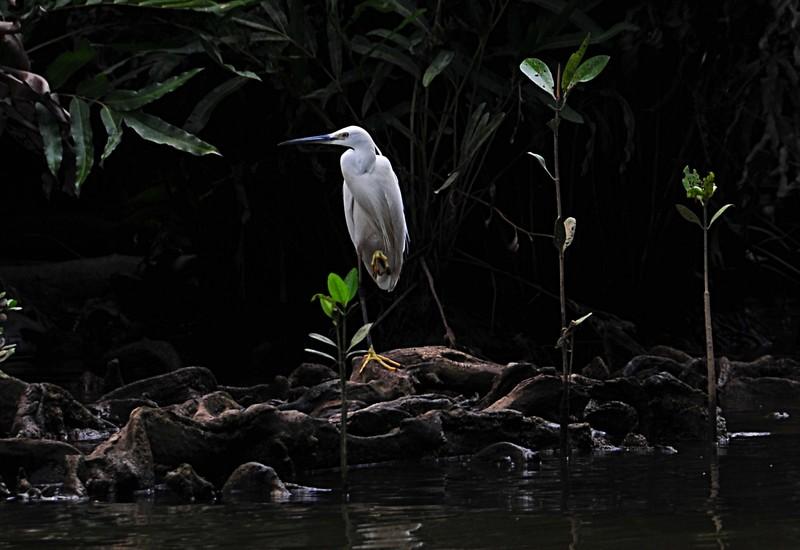 mar 26 0086 white bird 1 leg