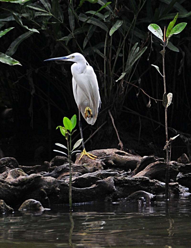 mar 26 0087 white bird