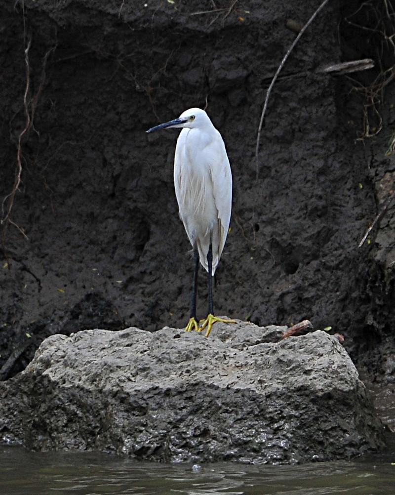 mar 26 0122 white bird