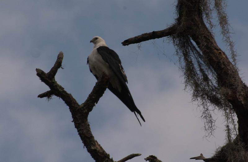 mar 26 3063 osprey