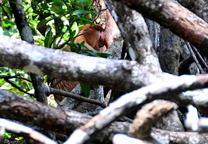 mar 26 9634 hiding in mangroves