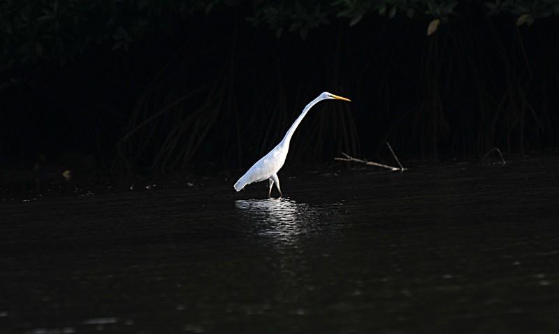 mar 27 0366 morning bird