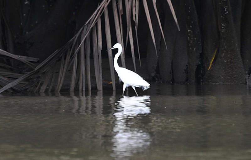 mar 27 0371 white bird palms