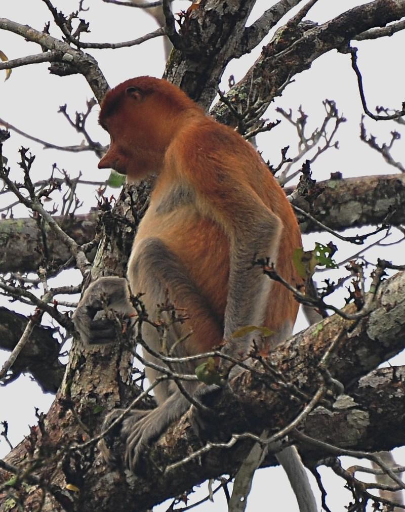 mar 27 0433 sitting monkey