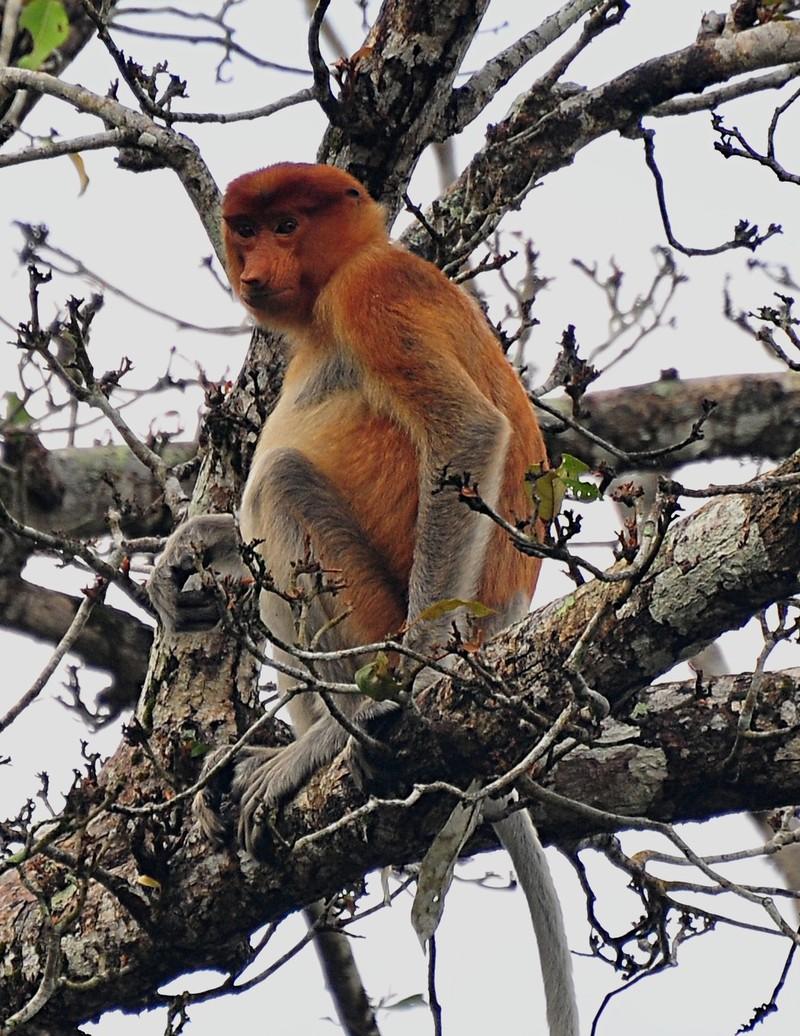 mar 27 0436 female monkey